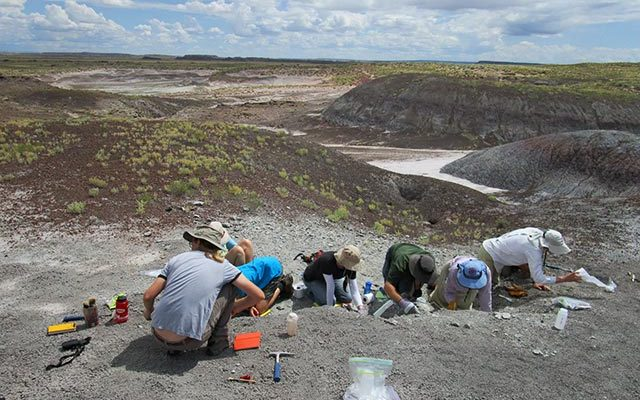 Dig Fossils for a Day Paleontology Class