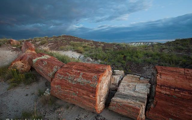 Petrified Forest Logs | Photo by Larry Lindahl