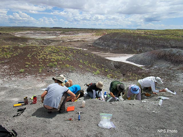 Dig Fossils for a Day Class | NPS Photo