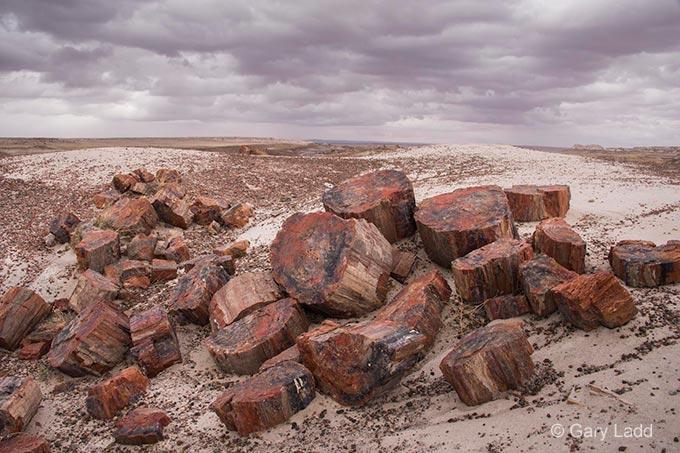 Petrified logs under a stormy sky | Photo by Gary Ladd