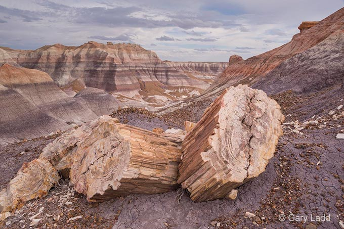 Petrified Forest formation and log | Photo by Gary Ladd
