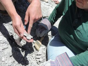 Fossil Dig | NPS Photo